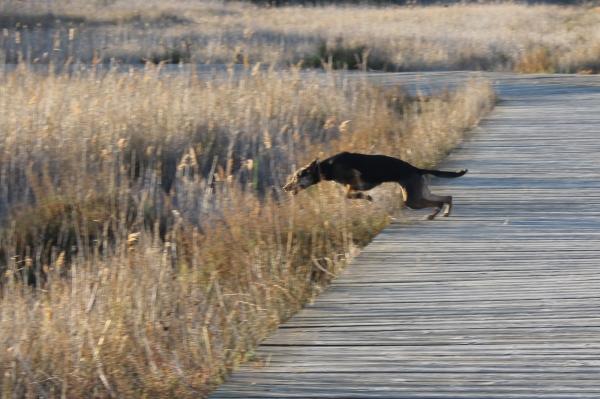 Dog starting sprint