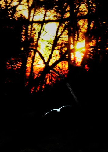 Sunrise and seagull