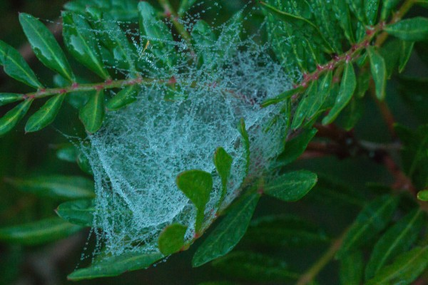 Spiderweb with droplets
