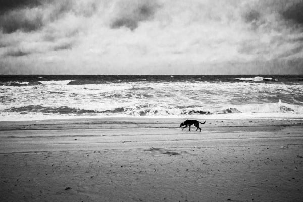 landscape: beach
