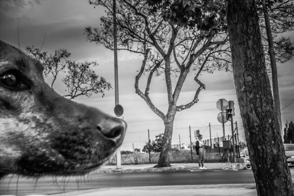 Dog head on street