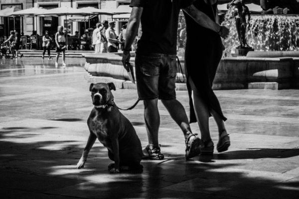 Dog with man and woman
