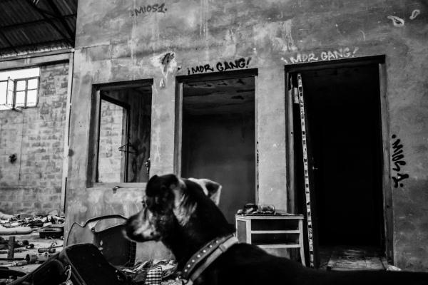 dog in abandoned warehouse