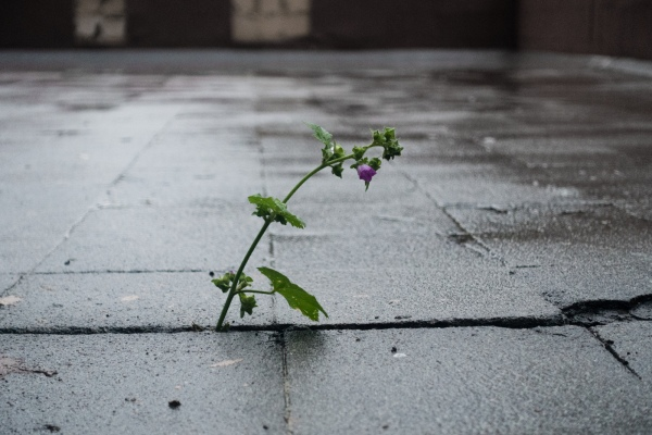 isolated small plant