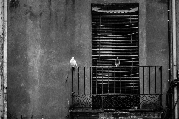 two pigeons on a balcony