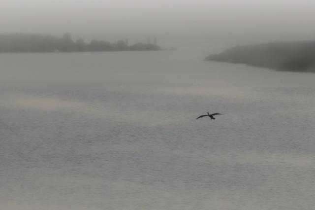 bird flying towards the fog
